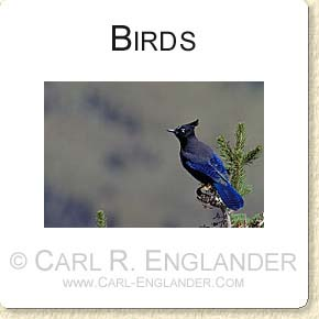 click here to see more bird images!