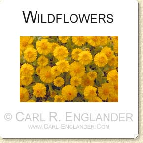 click here to see more wildflower images!